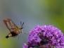 Vlinders en libellen